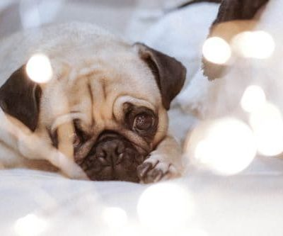 Calm, Lazy & Loyal – 3 Best Dog Breeds For New Moms