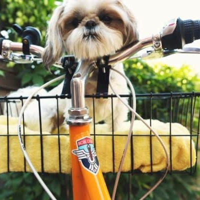 Choose Pet-Sitting for Extra Cash